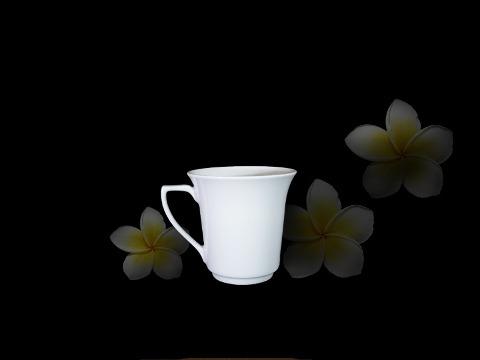 Ca Tulip Quai số 7 Trắng