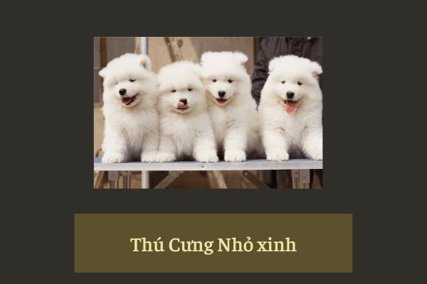 Quà Tặng 20/10 Cho Ngày Phụ Nữ Việt Nam